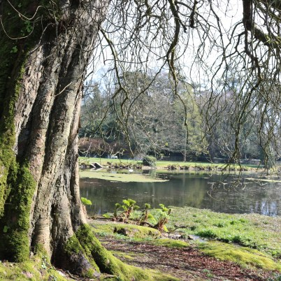 Johnstown Castle Gardens 2017-03-27 11.06.06 (12)