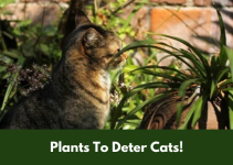 Plants To Deter Cats