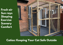 Catios; Keeping Your Cat Safe Outside