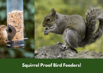 Squirrel Proof Bird Feeders!