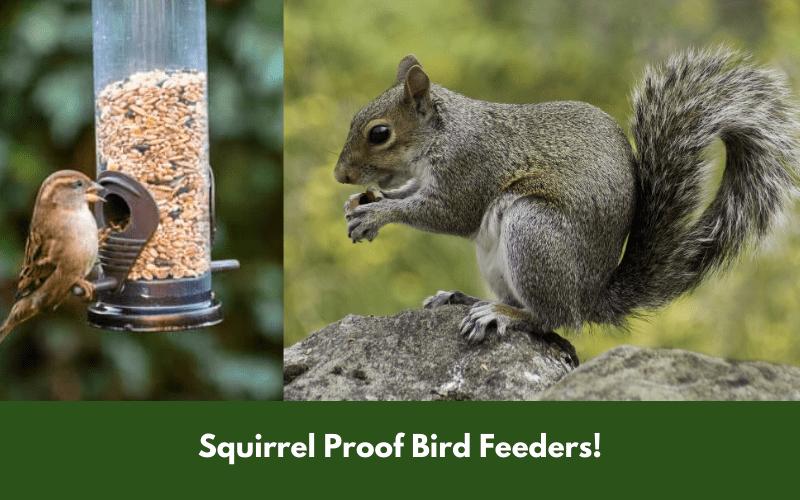 Squirrel Proof Bird Feeders!