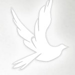stockdove-v2.png