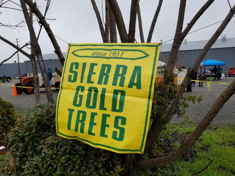 Sierra Gold Trees sign at Winters Friends of the Library Annual Tree Sale