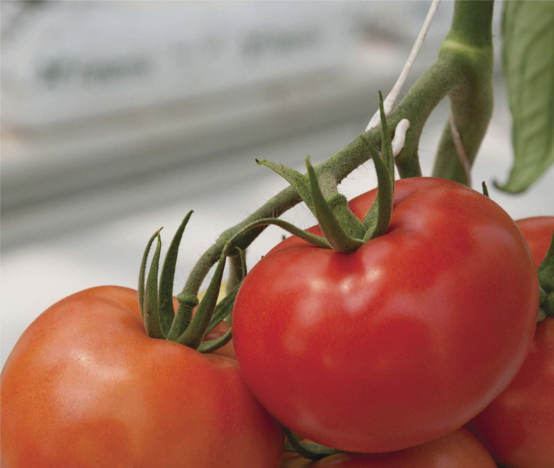 grow your own fruits and veggies