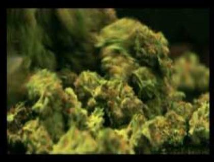 Burning debate of medical marijuana