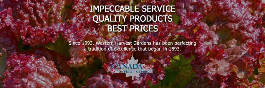 IMPECCABLE SERVICE, QUALITY PRODUCTS, BEST PRICES