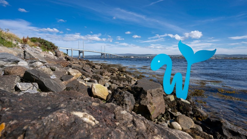 Whale-like-fish at Kessock Bridge