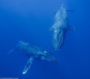 45-Ton Humpback Whale Talk @ Sanctuary Learning Center