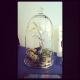 air plant in a cloche