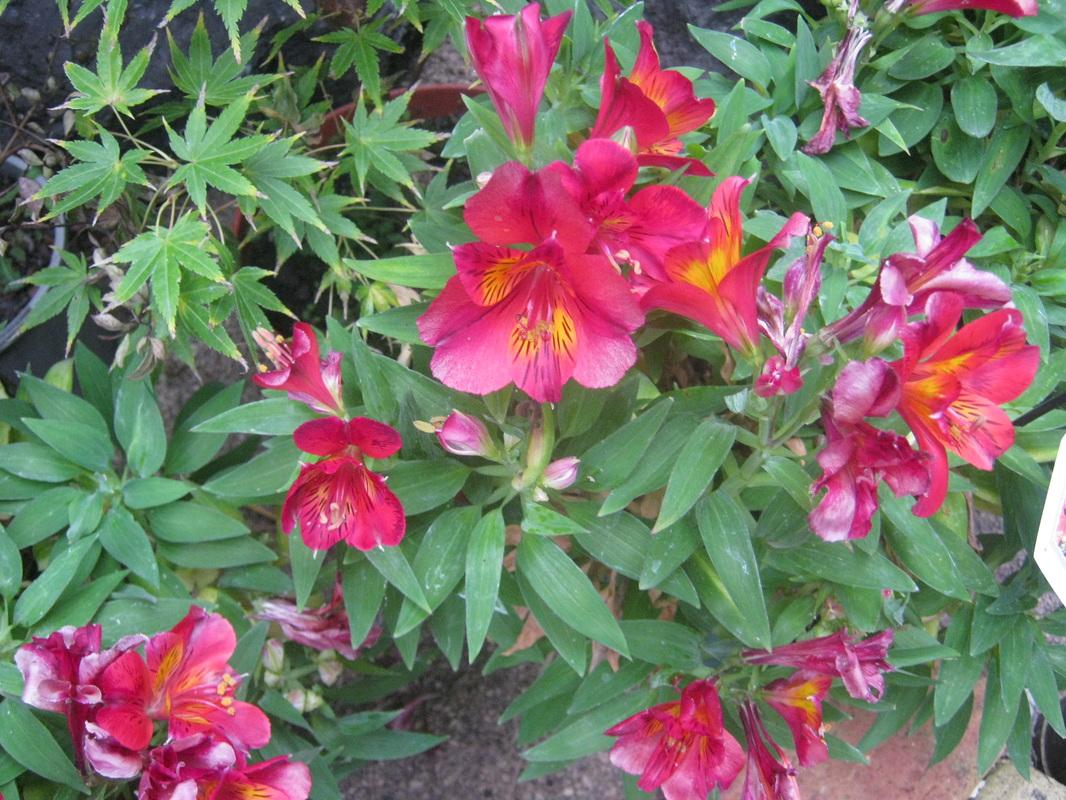 Flowers Garden Botanical Desert