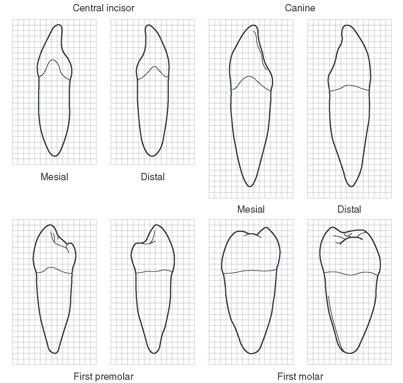 Orofacial Complex Form And Function Dental Anatomy