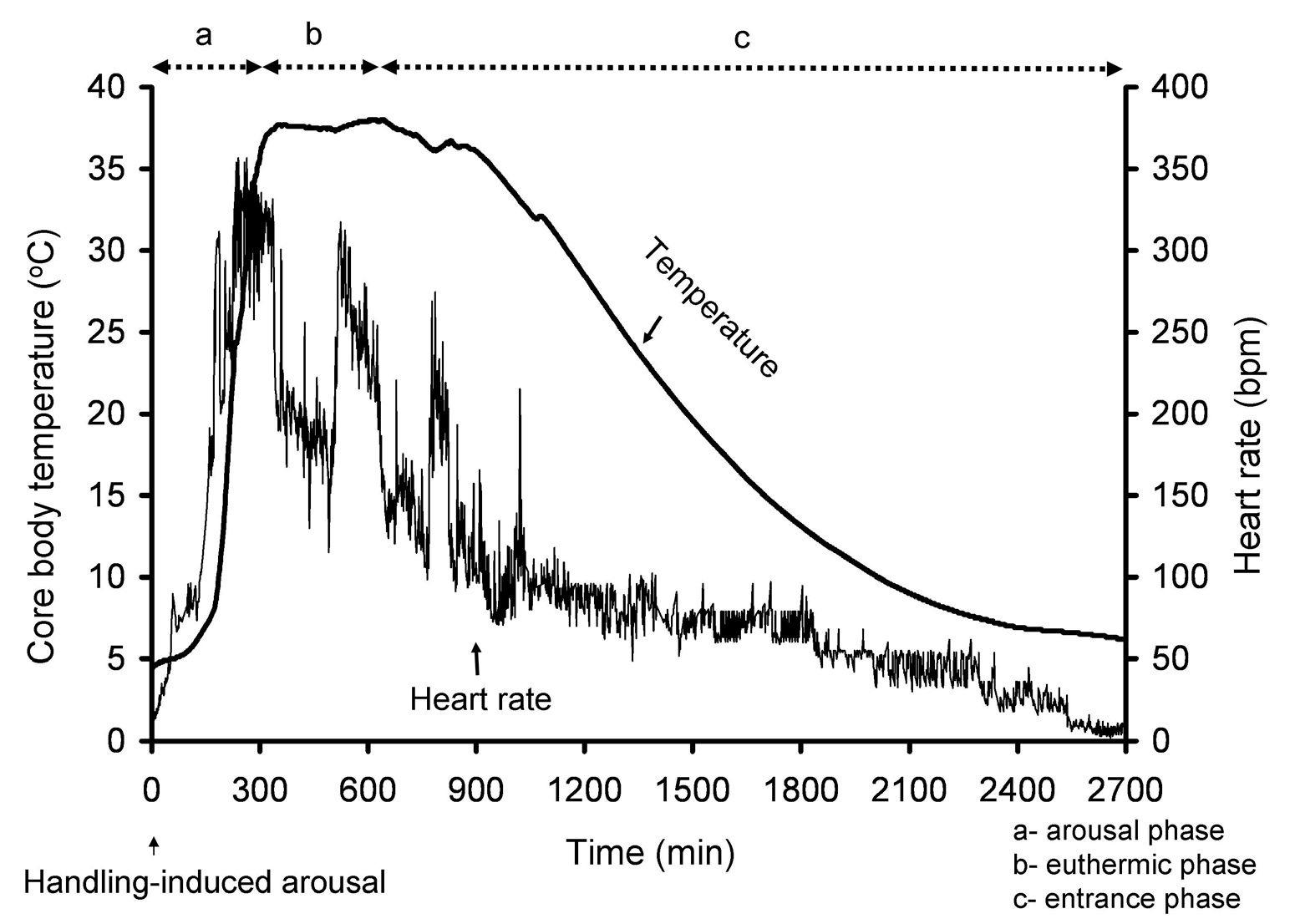 Natural Protection Against Cardiac Arrhythmias During