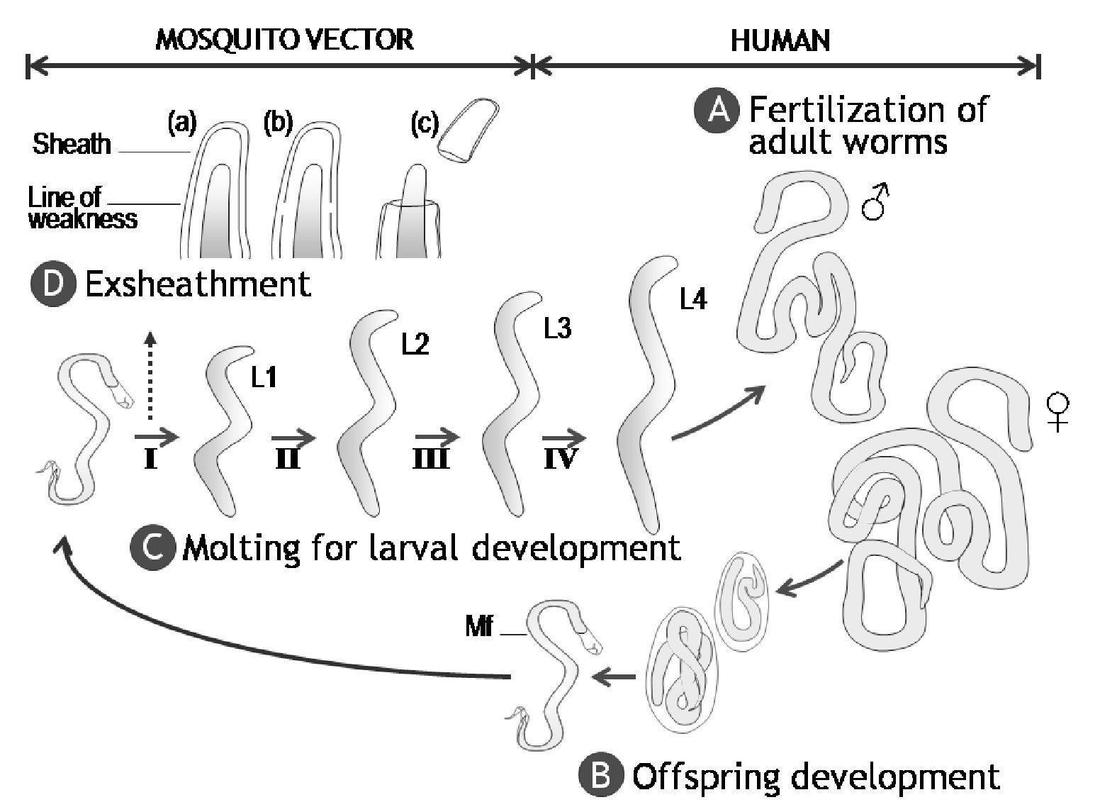 Molecular Diagnosis And Monitoring Of Benzimidazole