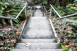 There are stairs all over the park that are hidden, seldom used, and relics from the time it was a major military base in Seattle.