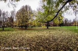 Last Leaves Falling, Reed College
