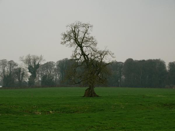 FairyTrees-0001