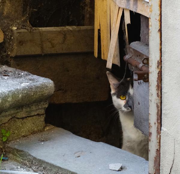 Barga Cats