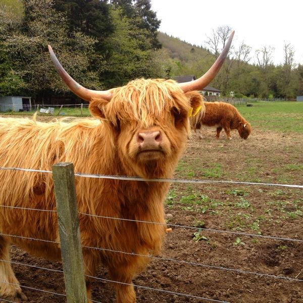 scotland8photos