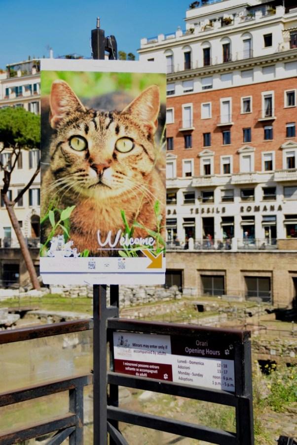 torre-argentina-cat