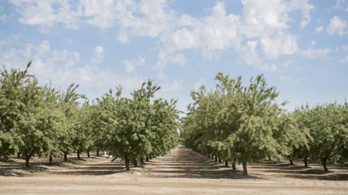 are pistachios the nut of the future - Are pistachios the nut of the future?
