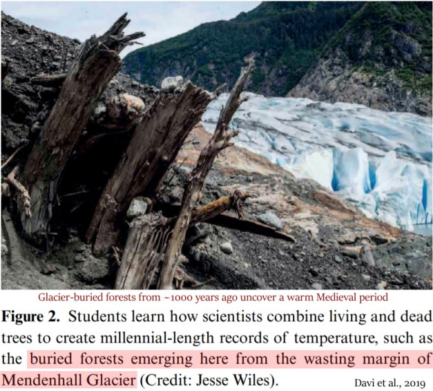 a 1000 year old forest buried under alaskas mendenhall glacier uncovers a warm medieval period - A 1000-Year-Old Forest Buried Under Alaska's Mendenhall Glacier Uncovers A Warm Medieval Period