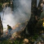 tribes and firefighters work together to prevent catastrophic wildfires - Tribes and firefighters work together to prevent catastrophic wildfires