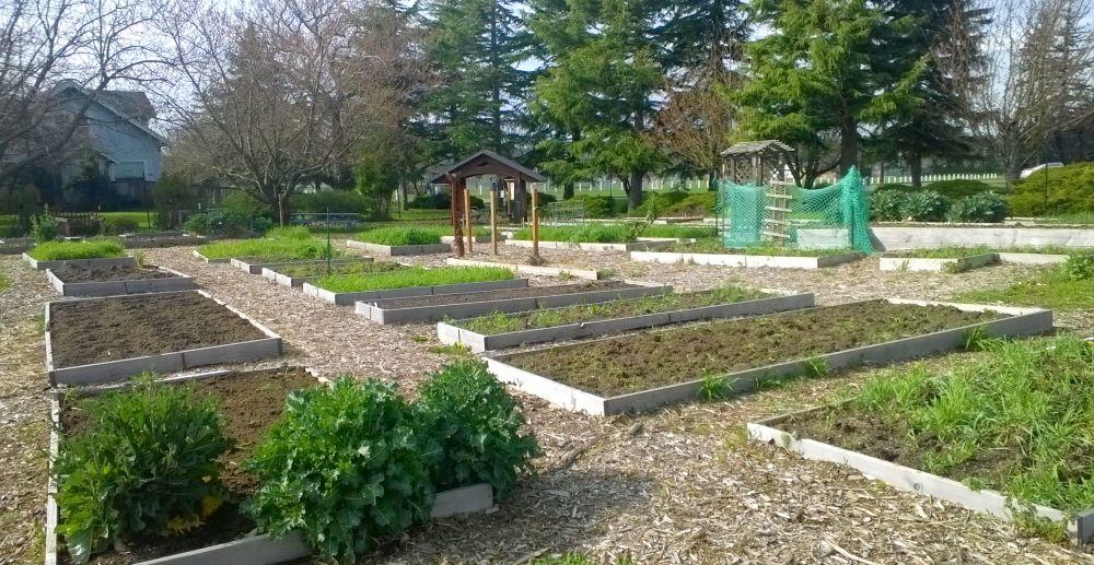Ferndale Friendship Community Garden
