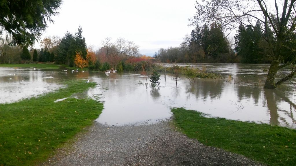VanderYacht Park after the Nooksack River level reached the 18-foot mark (November 18, 2015). Photo: My Ferndale News