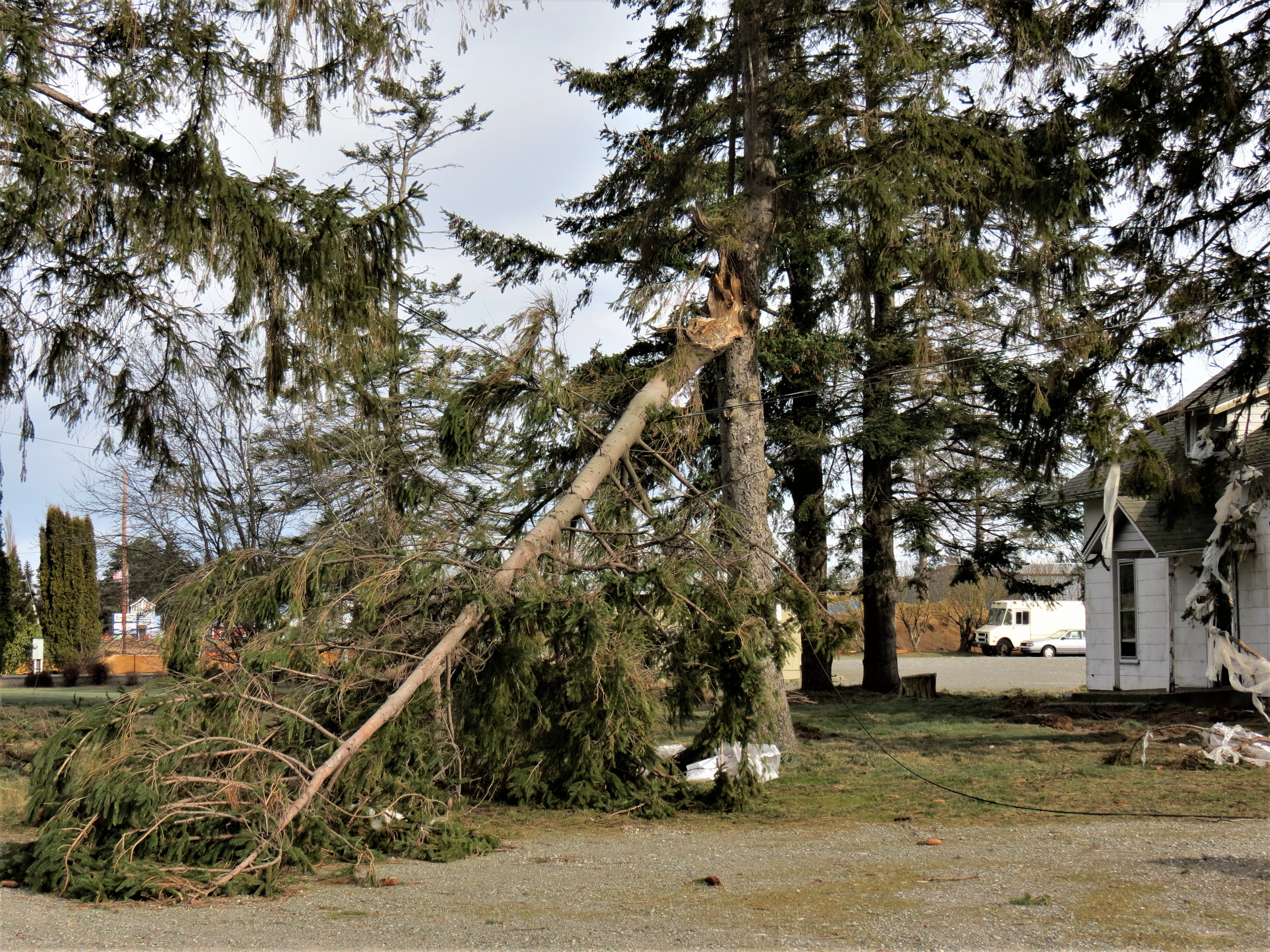 A damaged tree on Portal Way after a windstorm with 70mph gusts (February 10, 2019). Photo: My Ferndale News