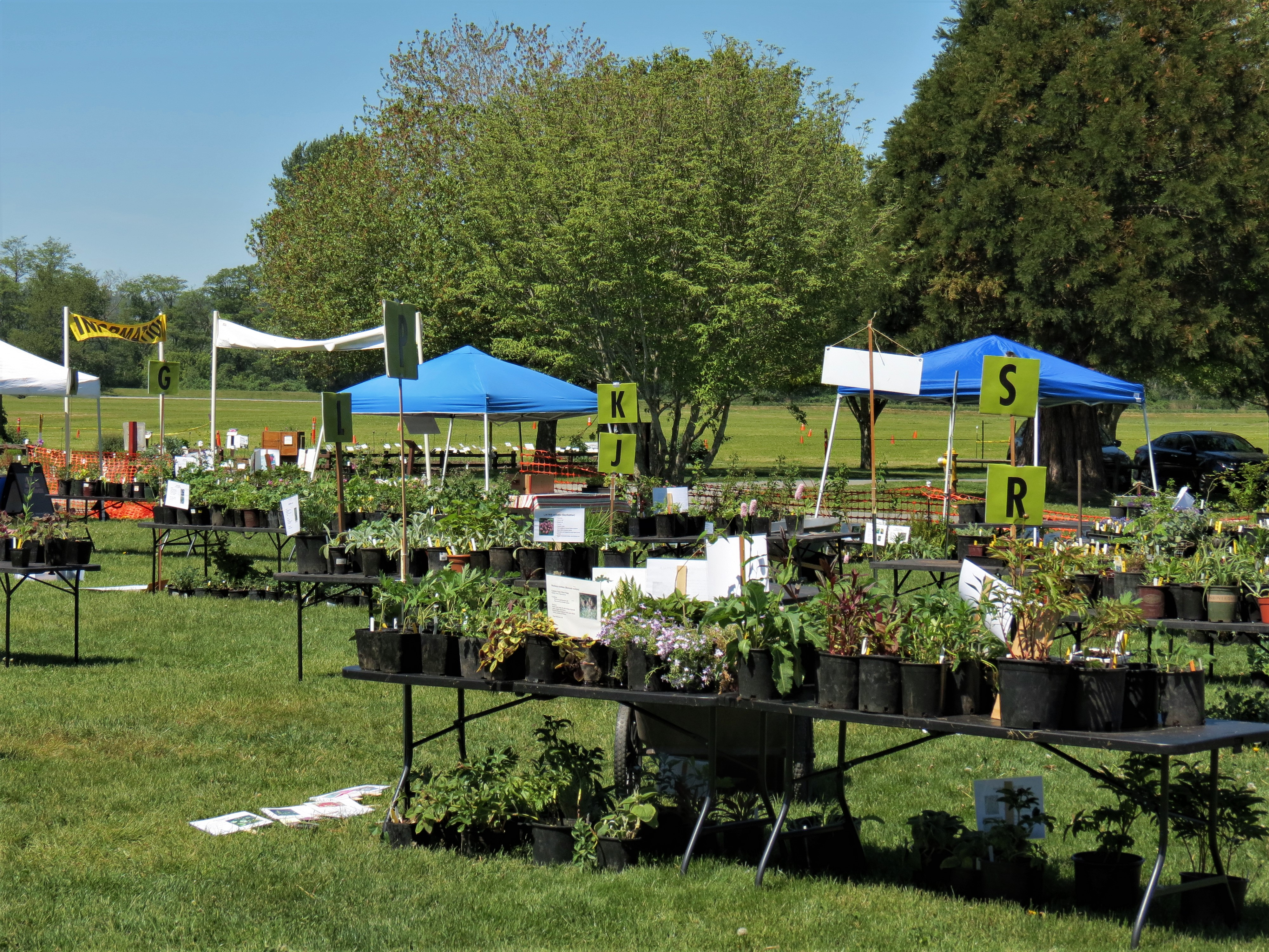 Whatcom Master Gardeners plant sale at Hovander Homestead Park (May 10, 2019). Photo: My Ferndale News