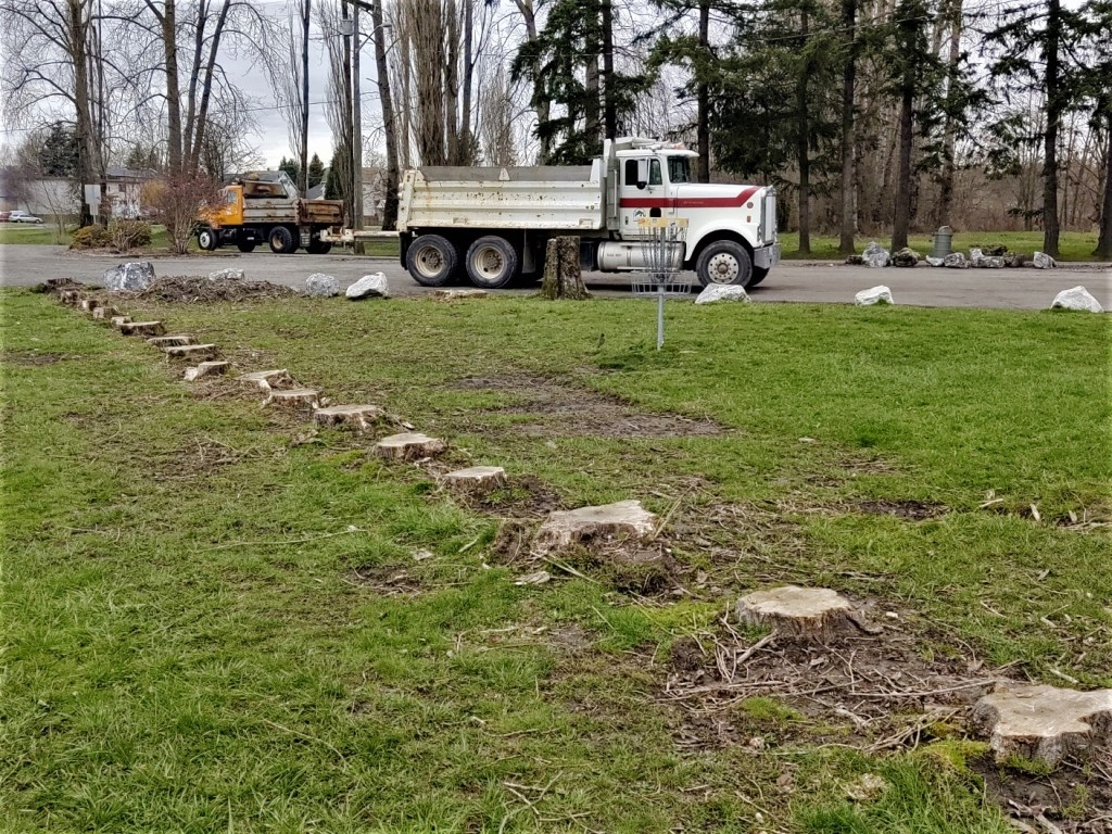 Tree stumps are all that remained after trees that were deemed a danger at VanderYacht Park were removed (March 10, 2020). Photo: My Ferndale News
