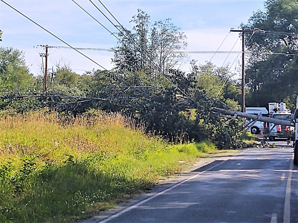 PSE crews work to remove a tree that fell across Ferndale Road by Marine Drive and repair damaged power lines (August 29, 2020). Photo: My Ferndale News