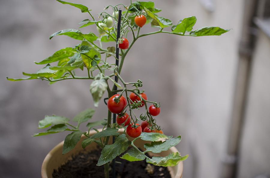Les Jolies Choses // Tomates cerises