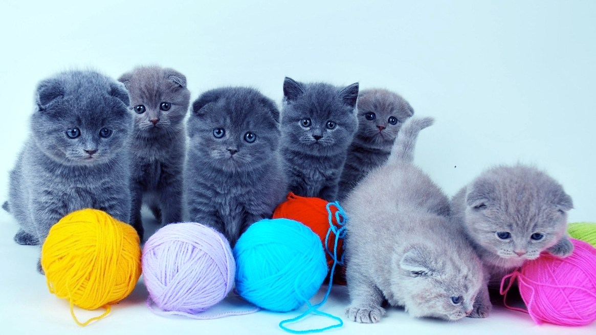 cute-black-and-gray-cats