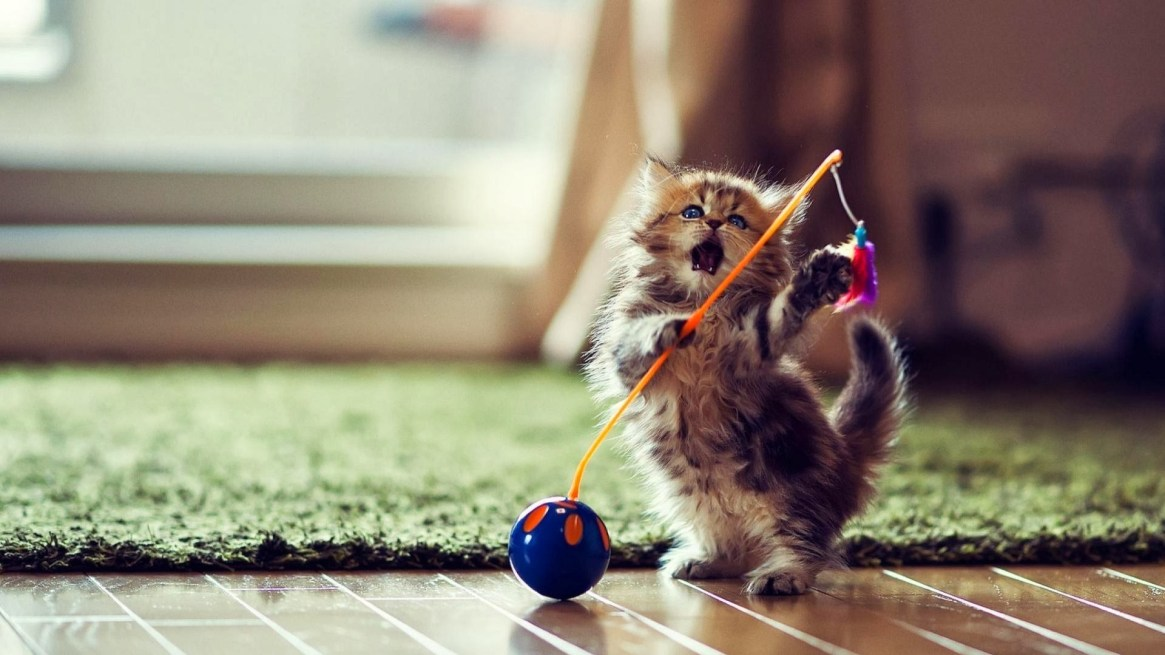 cute-cat-dance-wallpaper