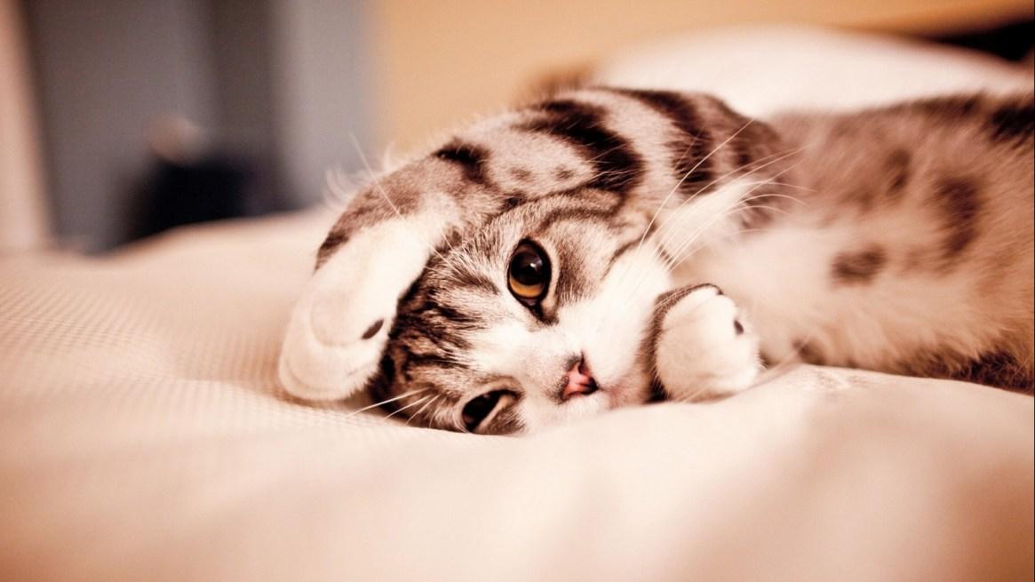 cute-cate-wallpaper