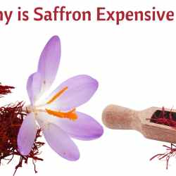 Why is Saffron Expensive