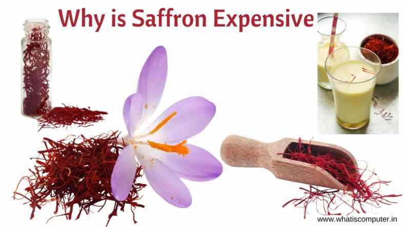 Why is Saffron Expensive: Saffron Price, Benefits