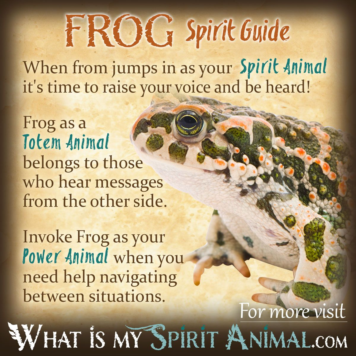What Is The Symbolic Meaning Of The Gecko For Native