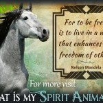 Horse Quotes Sayings Animal Quotes Sayings