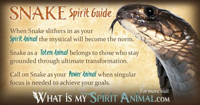 Black Bee Spiritual Meaning The Best Bee 2018