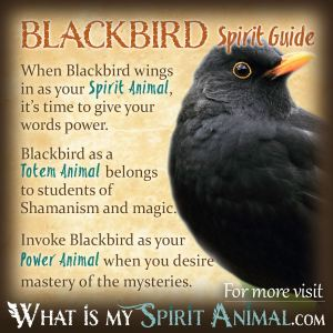 Blackbird Symbolism & Meaning | Blackbird Spirit, Totem & Power Animal