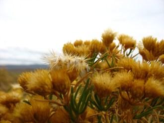 sunshine yellow matches the hills