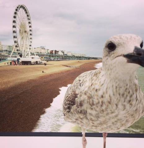 A weekend in Brighton
