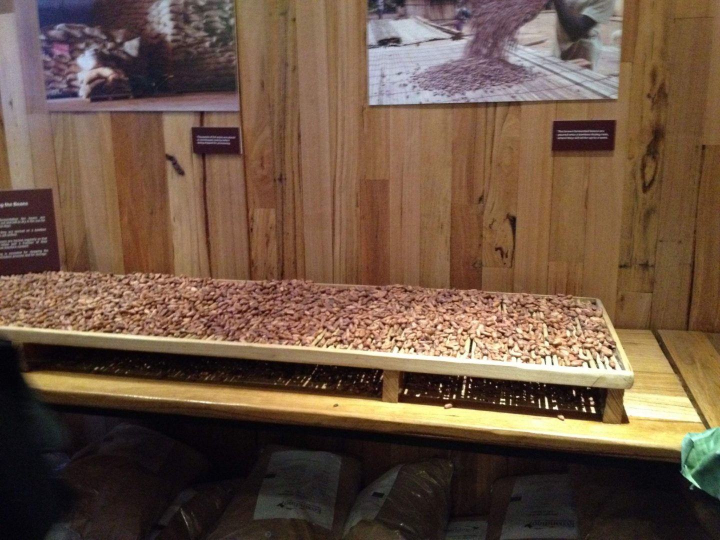 Cocoa beans at Panny's Chocolate Factory, Melbourne