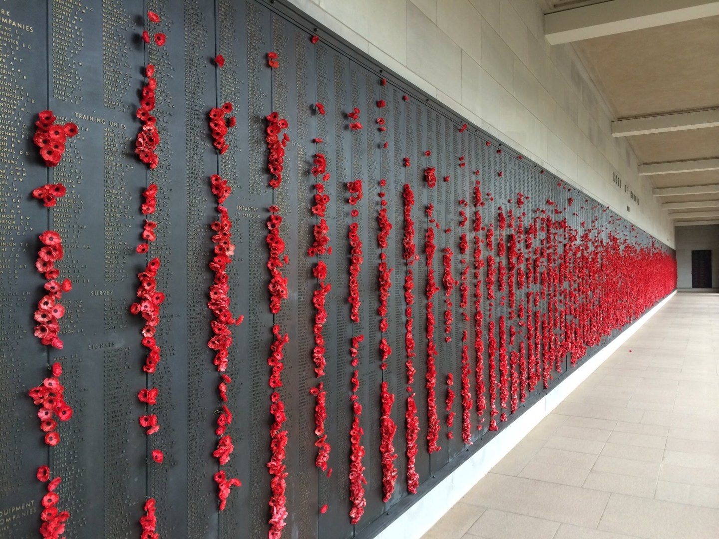 Poppies of the Australian War Memorial, Canberra