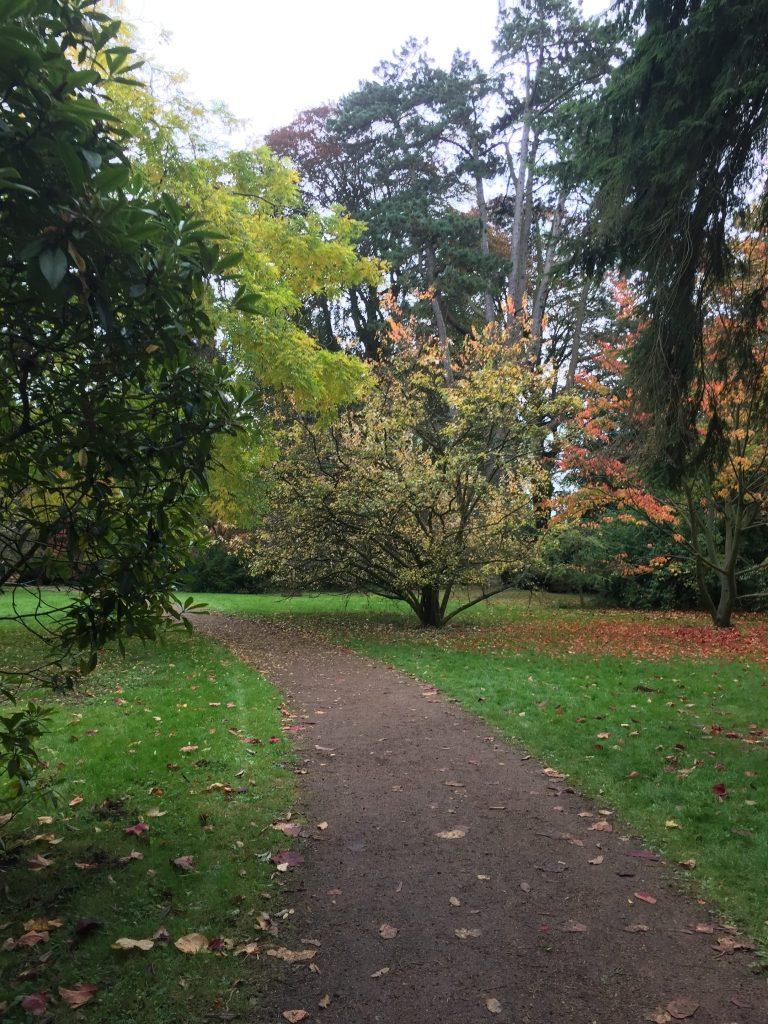 Walking through the arboretum in autumn