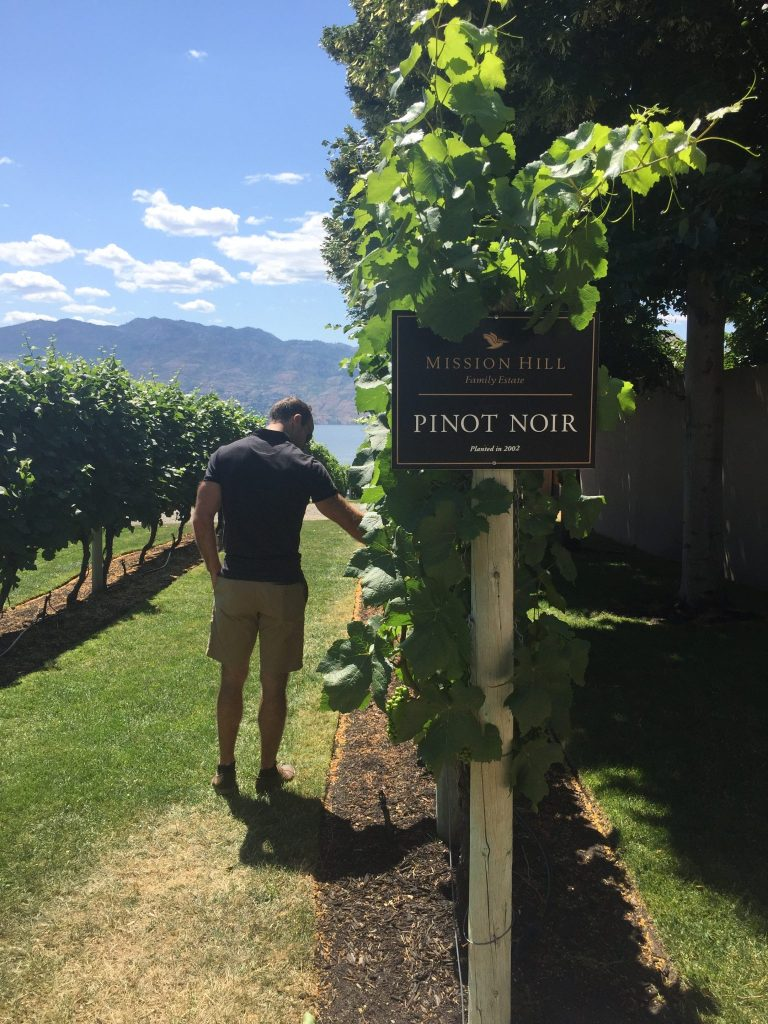 Exploring the vineyard