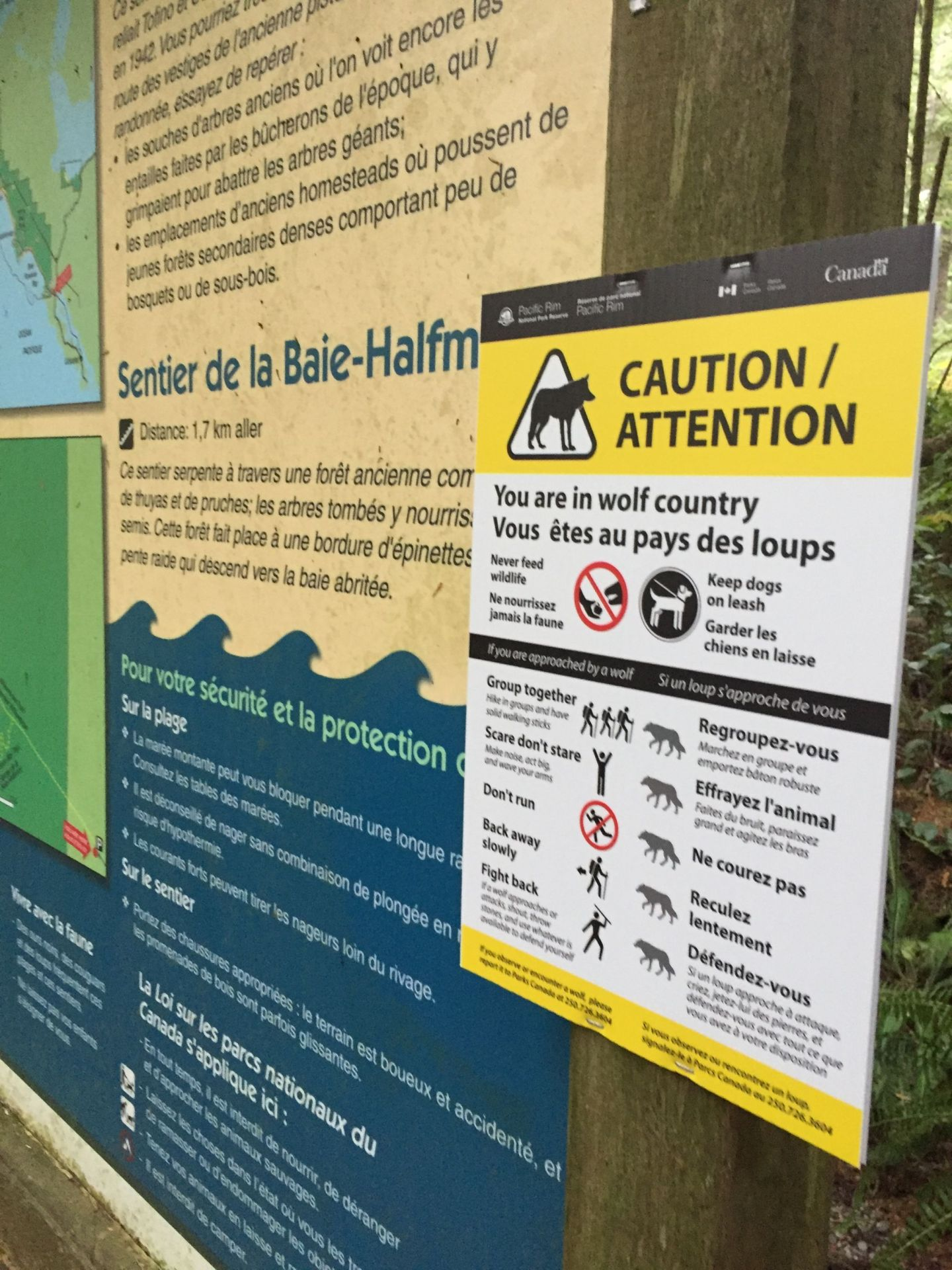 Wolf warnings at Pacific Rim National Park