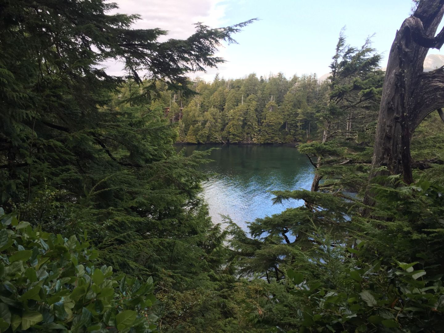 A lookout point from the Wild Pacific Trail, Ucluelet